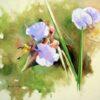 Commelina kituloensis